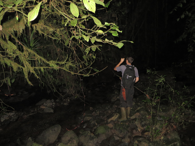 Brian Kubicki in the Siguirres River - searching for glass frogs