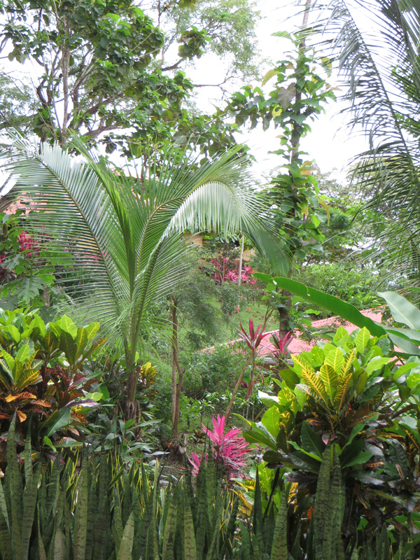 Tropical Wonderland at Cerro Lodge