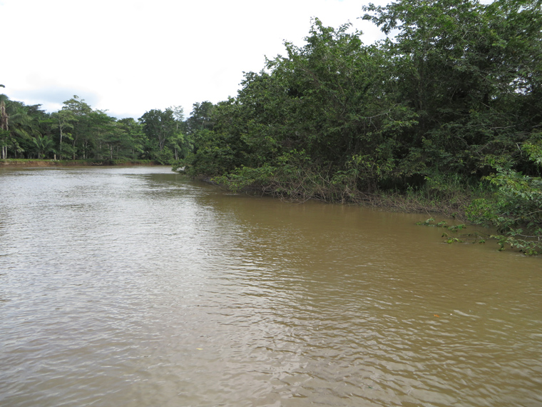 Rio Frio - view of forest along the bank